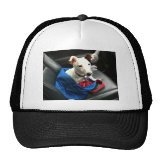 Jack Russell Terier Cap