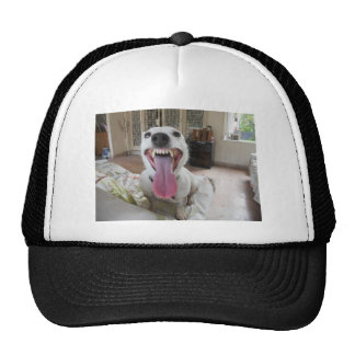 Jack Russell Terier Hats