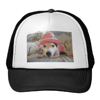 Jack Russell Terier Hat
