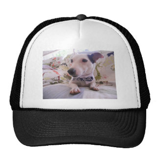 Jack Russell Terier Mesh Hat