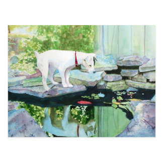 Jack Russell Terrier #1 Postcard