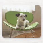 Jack russell terrier. 2 mousemats
