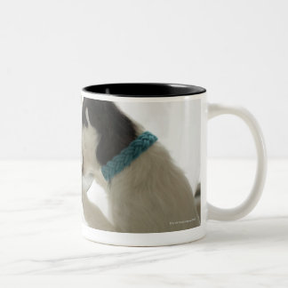 Jack russell terrier. 2 Two-Tone coffee mug
