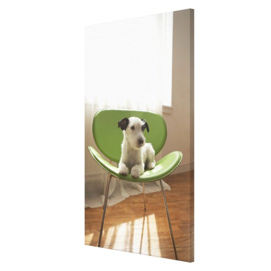 Jack russell terrier. 3 canvas print