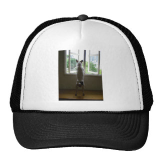 Jack Russell Terrier Trucker Hat