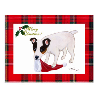 Jack Russell Terrier Christmas Tartan Postcards