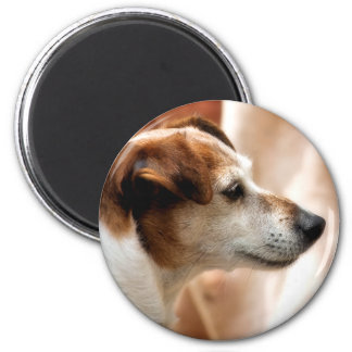 JACK RUSSELL TERRIER DOG MAGNET
