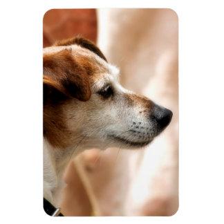 JACK RUSSELL TERRIER DOG MAGNET