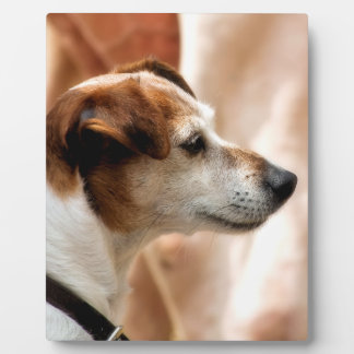 JACK RUSSELL TERRIER DOG PLAQUE