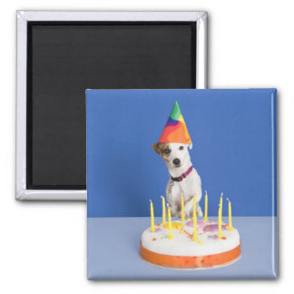 Jack Russell Terrier dog wearing party hat Square Magnet