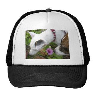Jack Russell Terrier Mesh Hat