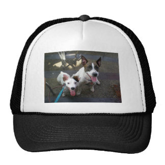 Jack Russell Terrier Mesh Hats