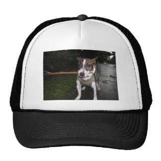 Jack Russell Terrier Trucker Hats