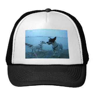 Jack Russell Terrier Hats