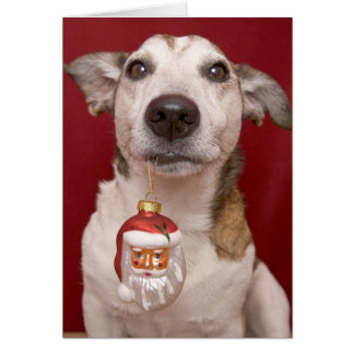 Jack Russell Terrier Holding Christmas Ornament Greeting Card