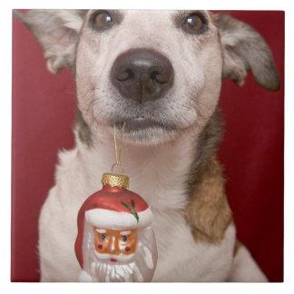 Jack Russell Terrier Holding Christmas Ornament Tile