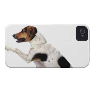 Jack Russell Terrier Lifting Paw Case-Mate iPhone 4 Cases