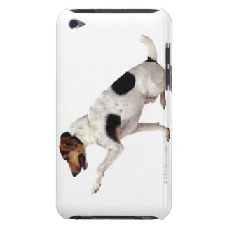 Jack Russell Terrier Lifting Paw iPod Touch Cases