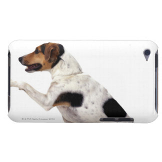 Jack Russell Terrier Lifting Paw iPod Touch Covers