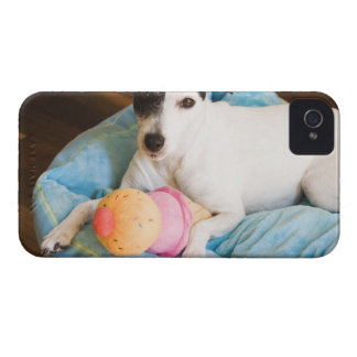 Jack russell terrier lying down iPhone 4 Case-Mate case