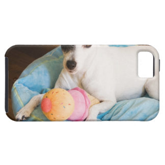 Jack russell terrier lying down iPhone 5 cases