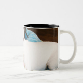 Jack russell terrier lying down Two-Tone coffee mug