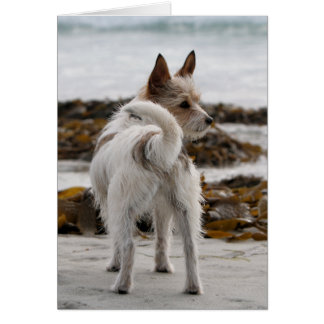 Jack Russell Terrier Mix - Winnie - Oman Card