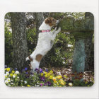 JACK RUSSELL TERRIER MOUSE MAT