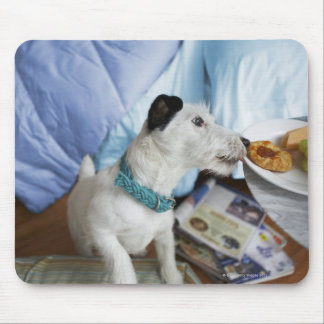 Jack russell terrier. mouse pad