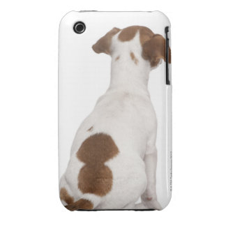 Jack Russell Terrier puppy (3 months old) Case-Mate iPhone 3 Cases