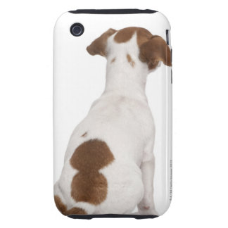 Jack Russell Terrier puppy (3 months old) iPhone 3 Tough Cover
