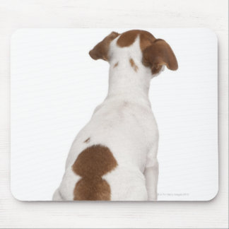 Jack Russell Terrier puppy (3 months old) Mouse Mat