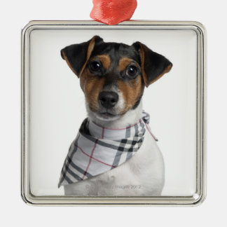 Jack Russell Terrier puppy (4 months old) Christmas Ornament