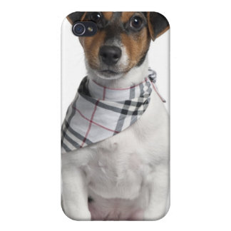 Jack Russell Terrier puppy (4 months old) iPhone 4 Case