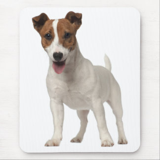Jack Russell Terrier Puppy Brown And White Dog Mouse Pad