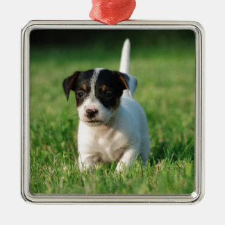 Jack Russell Terrier puppy Christmas Ornament
