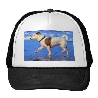 Jack Russell Terrier Running On The Beach Hats