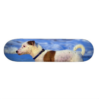 Jack Russell Terrier Running On The Beach Skate Board Deck