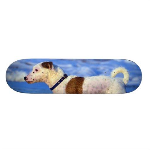 Jack Russell Terrier Running On The Beach Skate Board Deck