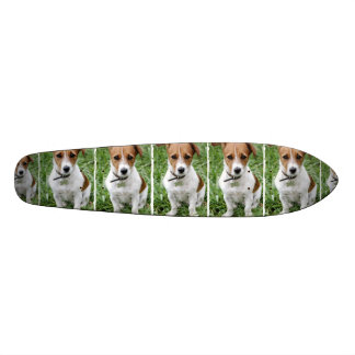 Jack Russell Terrier Skateboard