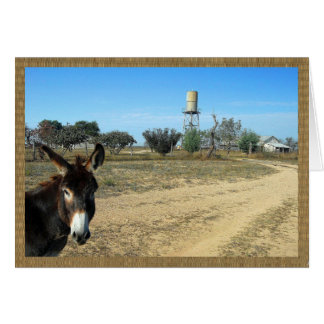 Jack the burro on the ranch card