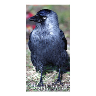 Jackdaw Stands In Midst Of Flower Petal Photo Greeting Card