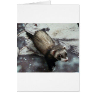 Jackie the Ferret Greeting Card