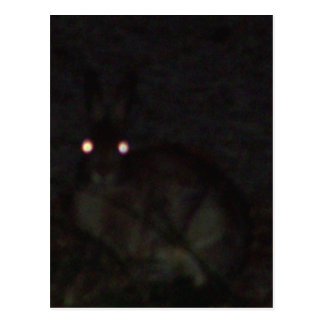 Jackrabbit At Night Postcard