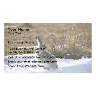 Jackrabbit Business Cards