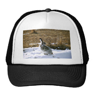 Jackrabbit Mesh Hat