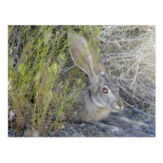 Jackrabbit Homesteader's Journal;The Desert & Jack Postcard