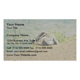 Jackrabbit in Water Business Card