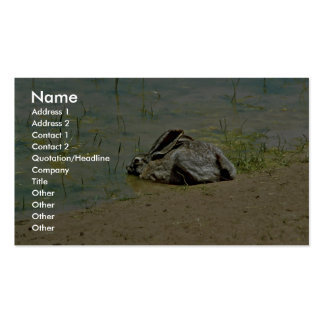 Jackrabbit in Water Business Cards