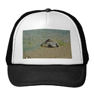 Jackrabbit in Water Trucker Hat